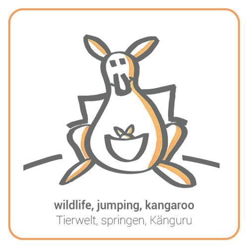 wildlife, jumping, kangaroo
